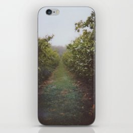 Orchard Row iPhone Skin
