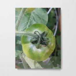 Green Tomato Metal Print