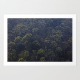 deep forest in the north of vietnam Art Print
