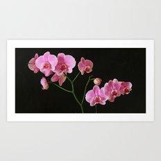 Pink Phalaenopsis Art Print