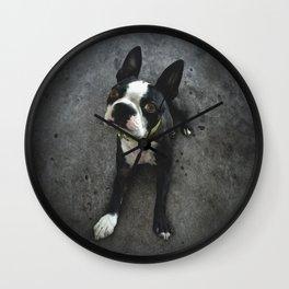 BOSCO (rescue pup) Wall Clock