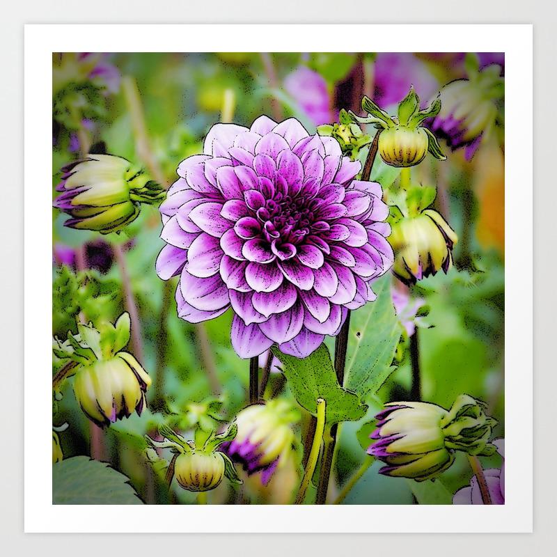 Lilac Purple Dahlia Flowers Buds Art Print By Sharlesart Society6