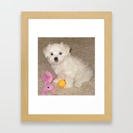 Maltese Puppy With His Toys Framed Art Print