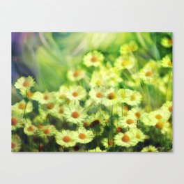 """Spring of daisies, green and sunlight"" Canvas Print"