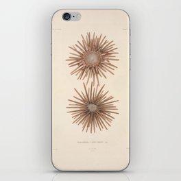 Naturalist Sea Urchins iPhone Skin