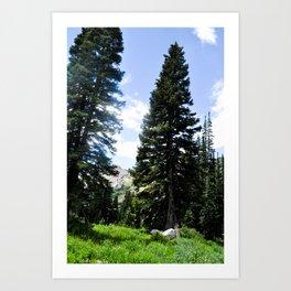 Tall pines Art Print