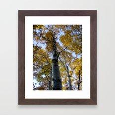 northern ontario birch part 2 Framed Art Print