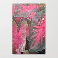 Pink Vertical Canvas Print