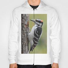 Male Hairy Woodpecker Hoody