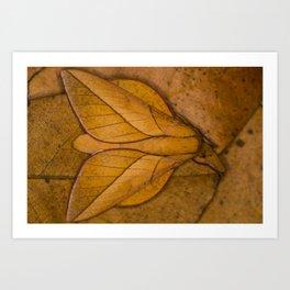 Oiticella convergens moth Art Print