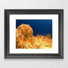 Sea Jellies Framed Art Print