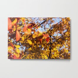 Fall Leaves Photography Print Metal Print