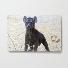 African Hyena Pup Metal Print