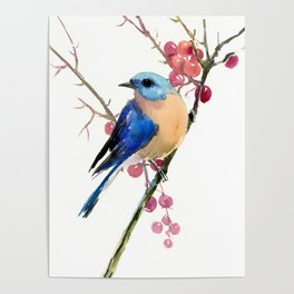 Bluebird and Berries Poster