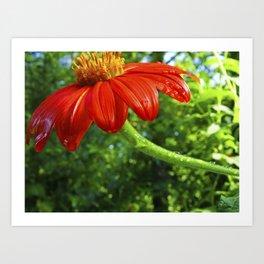 Flower Dew Art Print