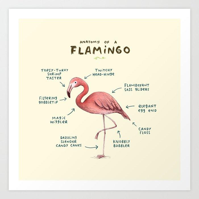 Anatomy of a Flamingo Kunstdrucke