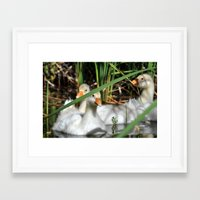 ducks Framed Art Prints featuring ducks by  Agostino Lo Coco