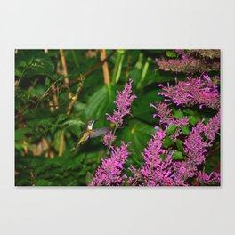 Hummingbird and agastache flower 60 Canvas Print