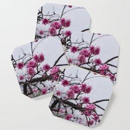 Sakura IV Coaster