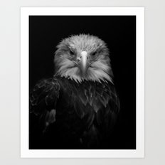 B&W Bald Eagle Art Print
