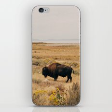 Bison Bull on Antelope Island iPhone & iPod Skin