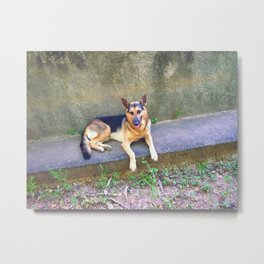 The dog Metal Print