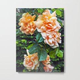 Wilting Roses Metal Print