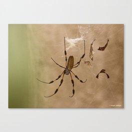 Florida banana Spider Canvas Print