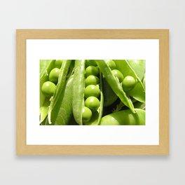Fresh open green pea pods in sunlight Framed Art Print