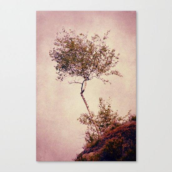 betulla Canvas Print