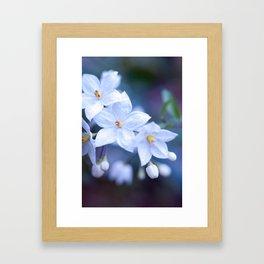 Jasmine Nightshade Flowers #3 #floral #art #society6 Framed Art Print