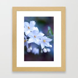 Jasmine Nightshade Flowers #3 #floral #art #society6 Framed Art Print
