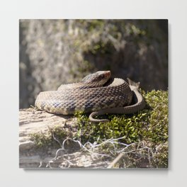 Watercolor Snake, Water Moccasin 09, Merchants Millpond, North Carolina, Swamp Defender Metal Print