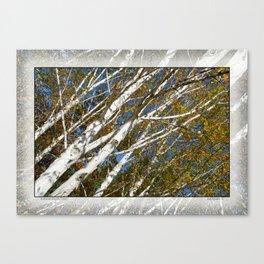 AUTUMN BIRCH TREES Canvas Print