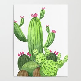 Green Cacti with Pink Flowers Poster