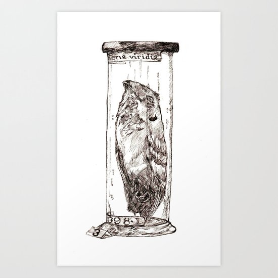 Frogmouth Art Print