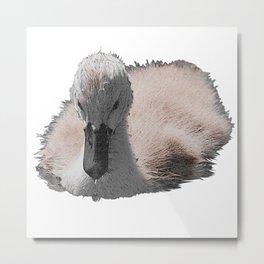 Swan chicks, birds, animals Metal Print