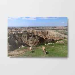 Bighorn Sheep At Sage Creek Metal Print