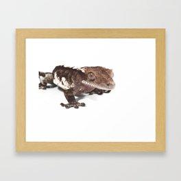 Crested gecko on white Framed Art Print