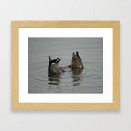 Duck Bums Framed Art Print