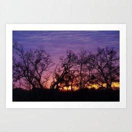 Sunrise Oaks and Moss Art Print