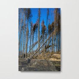 Fallen Trees After Storm Victoria February 2020 Möhne Forest 2 Metal Print
