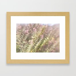Sunlit Dream Framed Art Print