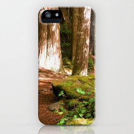 Hiking in the Old Growth Forest iPhone Case
