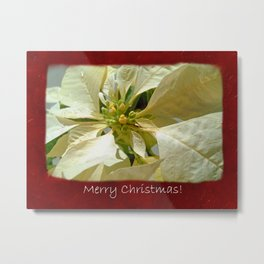 Pale Yellow Poinsettia 1 Merry Christmas P5F5 Metal Print