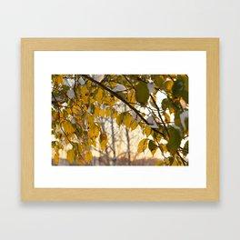 trees under snow Framed Art Print