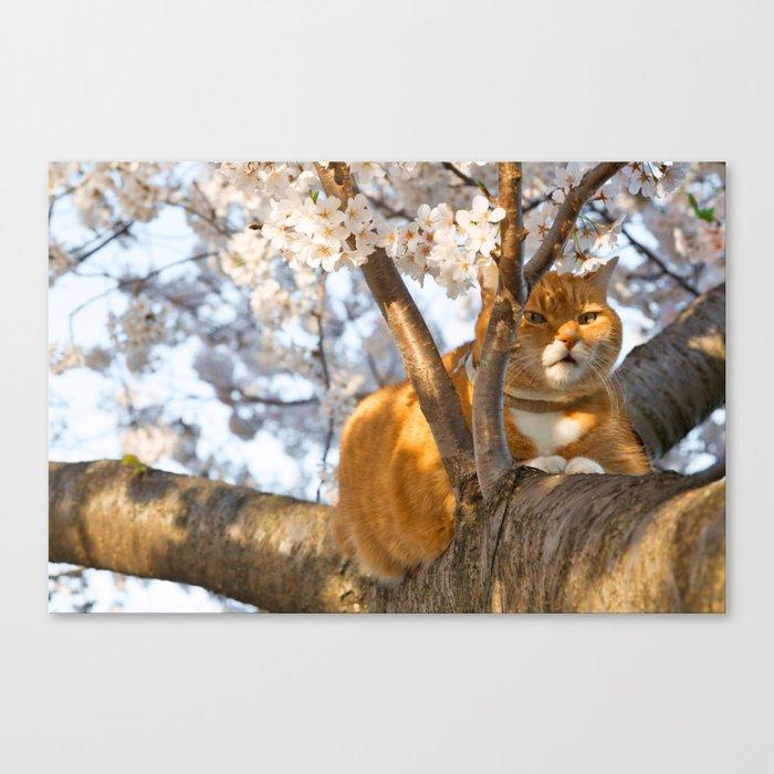 Ginger Cherry Blossom Cat Canvas Print