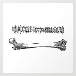 Femur spinal Art Print