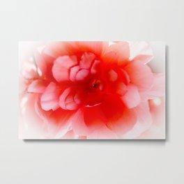 Pink Begonia Metal Print