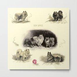 Pomeranian TOY SPITZ Dogs Metal Print